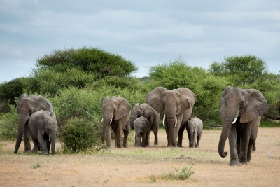 From The Cotswolds to Botswana and Back Again Part 2